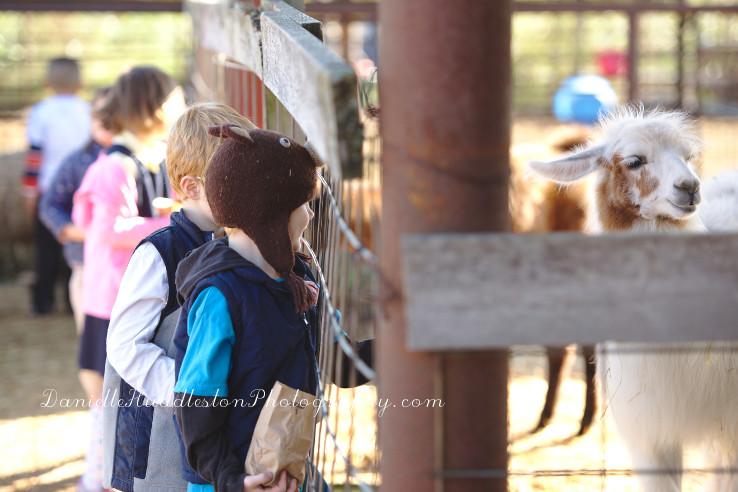 llamafeeding