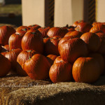 Carmichael's Pumpkin Patch ~Bixby, OK