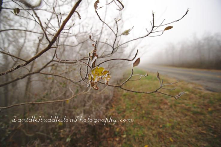 leaffrost