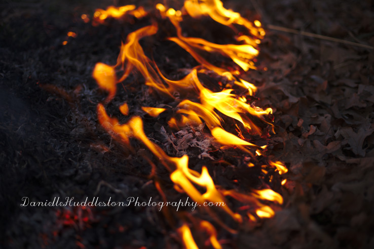 burnleaves