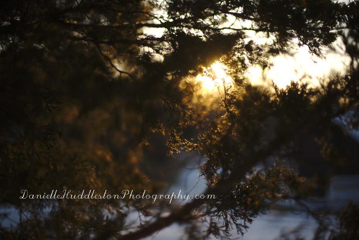 cedarbranch