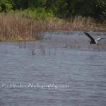 Canoeing ~Lake Sahoma