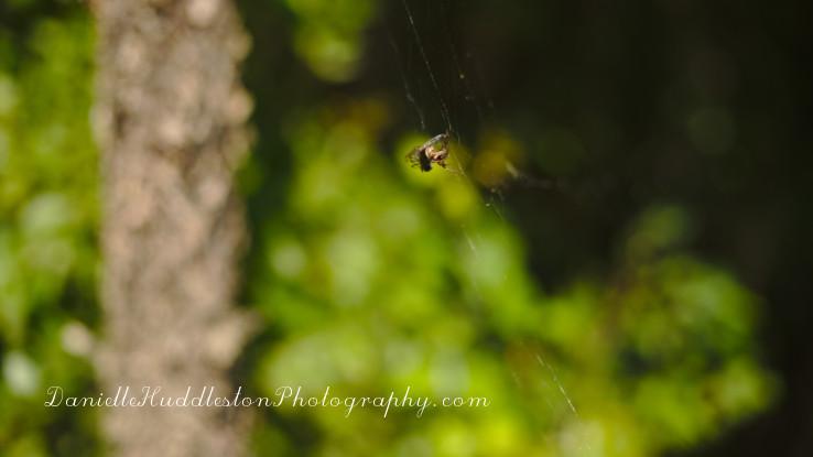 spidereat