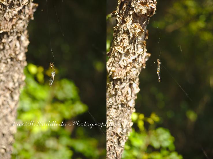 spiderspinning