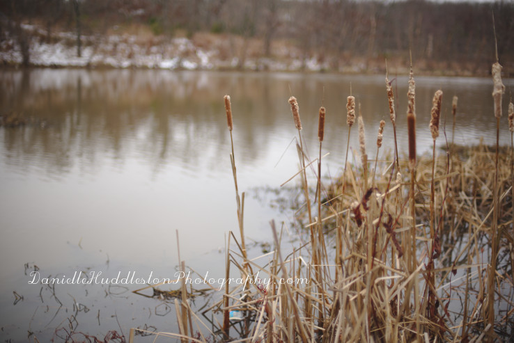cattails2