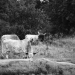 Labor Day Vacation 2017 ~ Day 3~ Witchita Mountains Wildlife Refuge